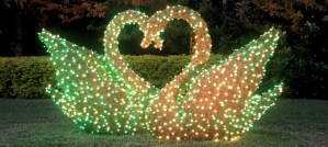 Christmas Swan Topiaries - Photo by Jared