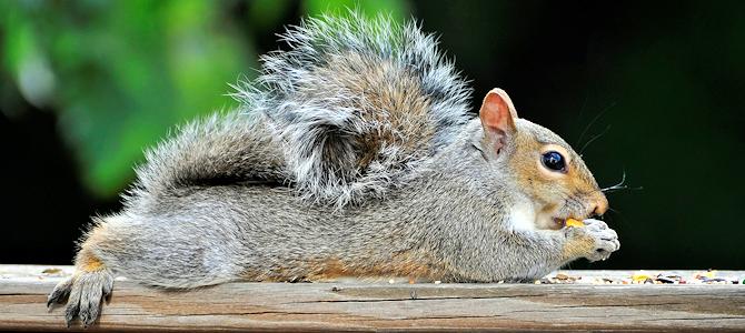 Celebrate Squirrel Appreciation Day!