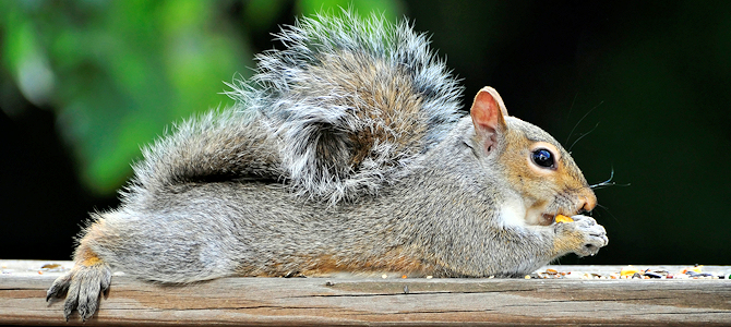 Give 'Em a Break - It's National Squirrel Appreciation Day! - Photo by likeaduck