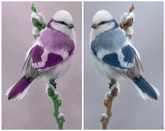 Purple Bird and Original Photo (Cropped)