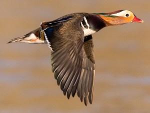 Flight Beauty - Photo by Norman West