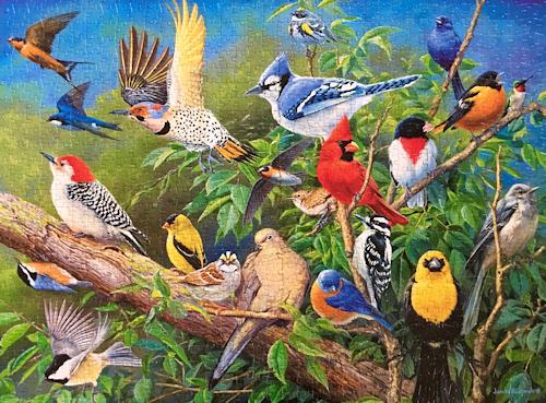 Backyard Bird Puzzle - Photo by OakleyOriginals
