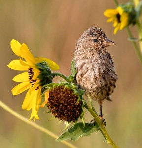 Feathers and Flowers - Photo by Larry Lamsa