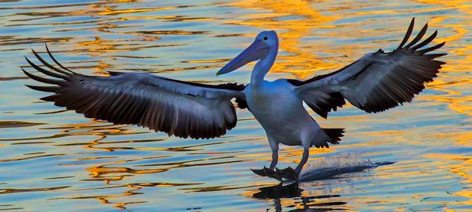 Pelican Landing - Photo by John