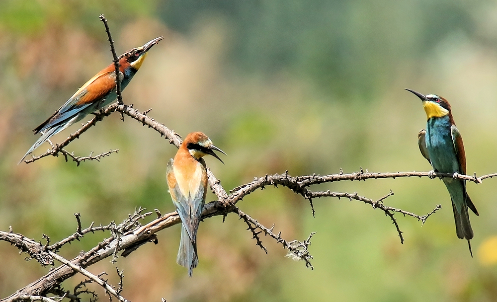 Triplets - Photo by Imran Shah