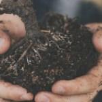 How My Husband Gardening Inspired Me
