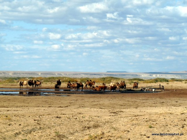 W końcu! Morze Aralskie (to ta dziura za wielbłądami)