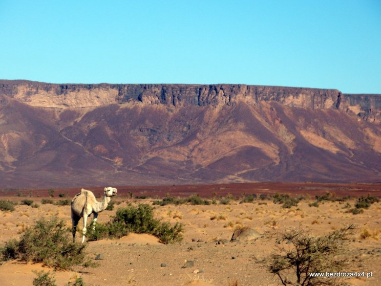 Mauretania - zaproszenie