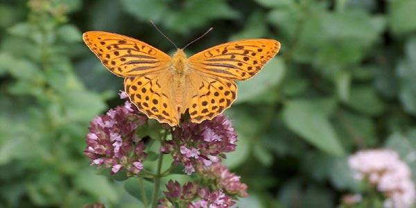 Drei Dinge, die jeder tun kann um Insekten zu schützen