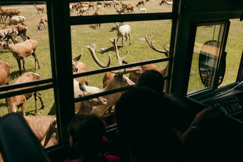 bałtów safari zwierzęta blisko