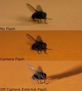 Lighting Comparison flies
