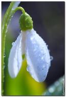 Фото цветов высокого разрешения, картинки и фотографии