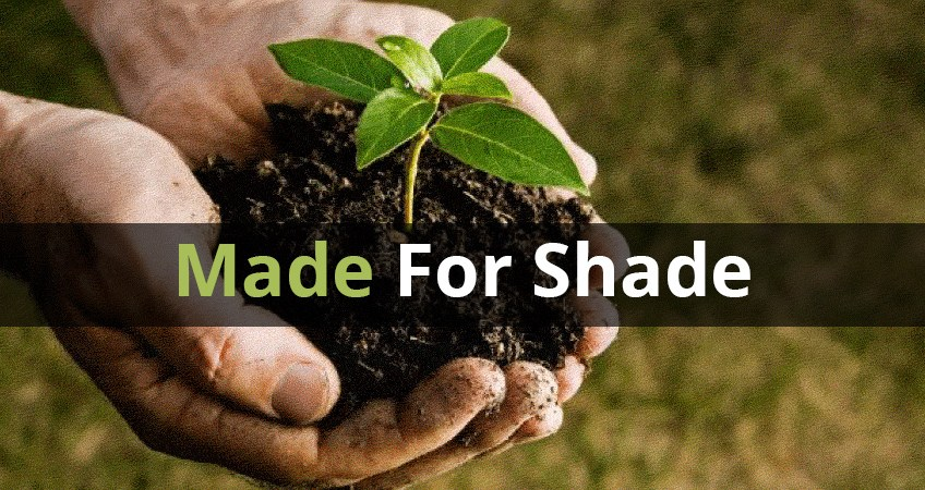 What You Can Grow In Shady Spaces