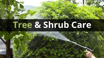 tree and shrub 10 Ways To Care For Your Shrubs This Fall