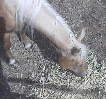 Carrot grasing (05 JUN 1998)