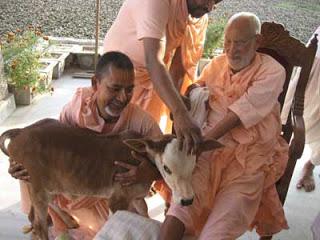 Srila Gurudeva e vaquinha, Godrumadvipa