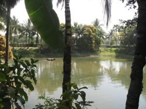 Árvore Kadamba no Sri Radha-kunda, Ritudvipa