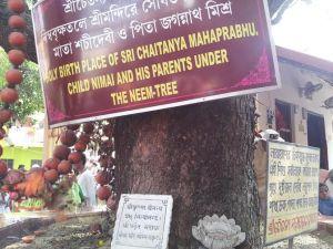Local de nascimento de Sri Caitanya Mahaprabhu, sob a árvore de Neem