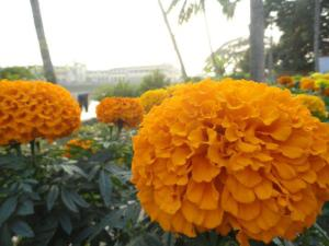 TUDO em Gauda-mandala, incluindo a água, a terra e as árvores, é transcendental.
