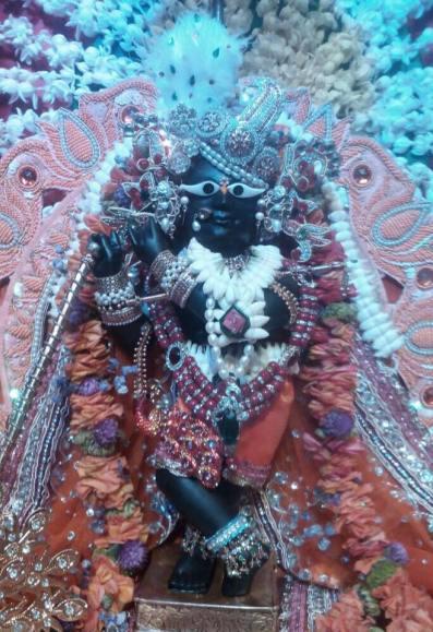 Darsan especial no dia 4 de agosto de 2015, da linda Deidade de Srila Gopal Bhatta, Sri Sri Radha Ramana, que ainda hoje é adorada em Vrindavana.
