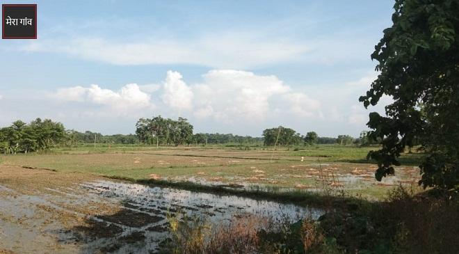 नारायणपुर गांव में हरियाली होने के कारण यहां का पानी और हवा दोनों ही स्वच्छ है.