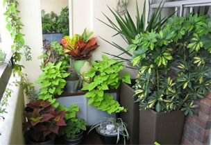 Tips And Ideas To Create Roof Gardening Balcony Garden Window Garden In Apartment