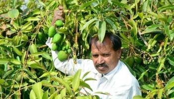 फलों की खेती कर किसानों ने पेश की अनोखी मिशाल