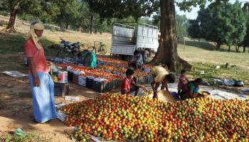 बाड़ी विकास कार्यक्रम का लाभ उठाकर ग्रामीण किसान आर्थिक समृद्धि की ओर अग्रसर हो रहे हैं।