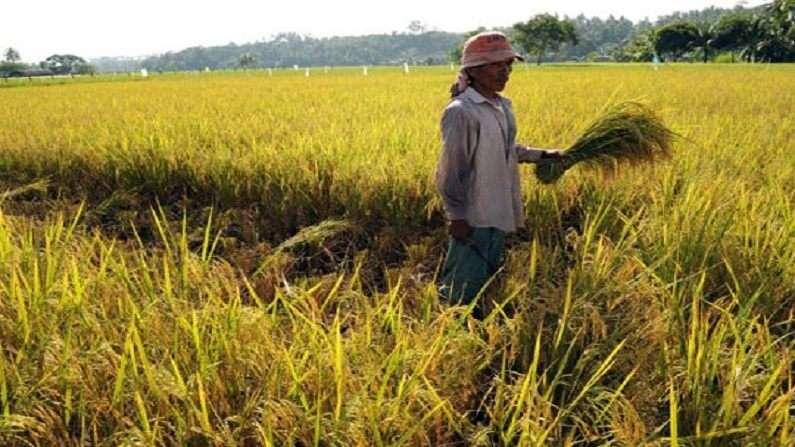 धान के बदले अन्य फसलों की खेती पर मिलेगा 10 हजार इनपुट सब्सिडी
