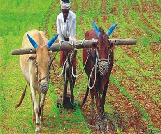 किसानों को रियायती दरों पर मिलेंगे सब्जियों एवं मसाला फसलों के पौधे