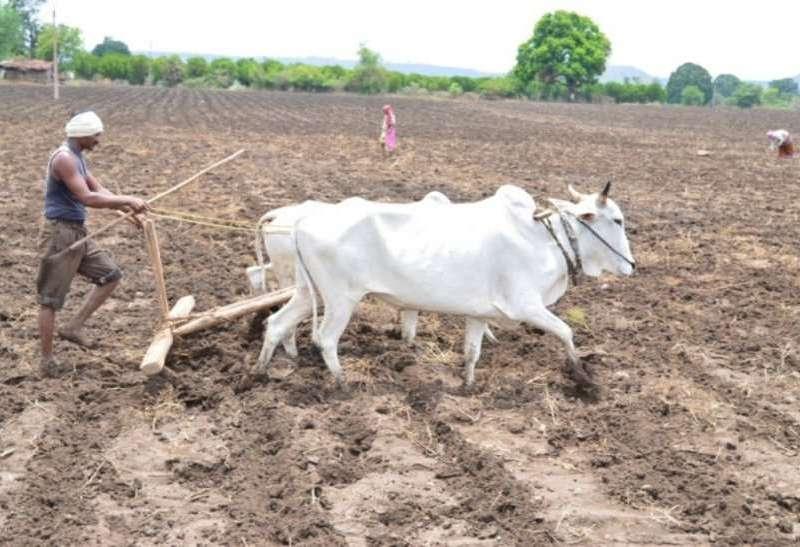 मानसून को देखते हुए ऐसे करें खेतों की तैयारी