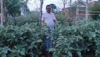 वर्मी कम्पोस्ट से मिल रहा बेहतर उत्पादन, जैविक खेती की ओर अग्रसर हो रहे किसान