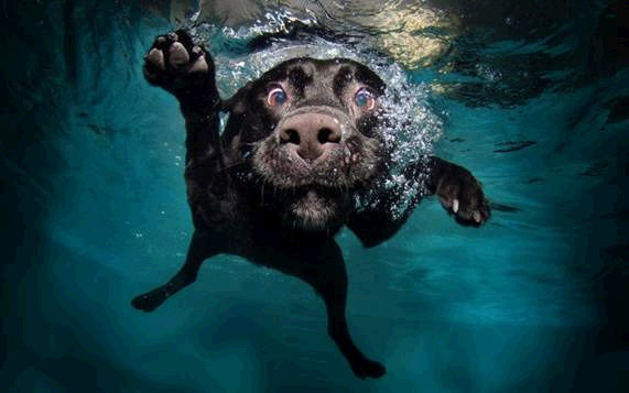 dogs in water9