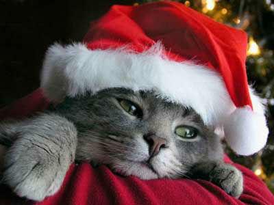 Pet-Christmas2