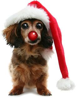 Pet-Christmas3