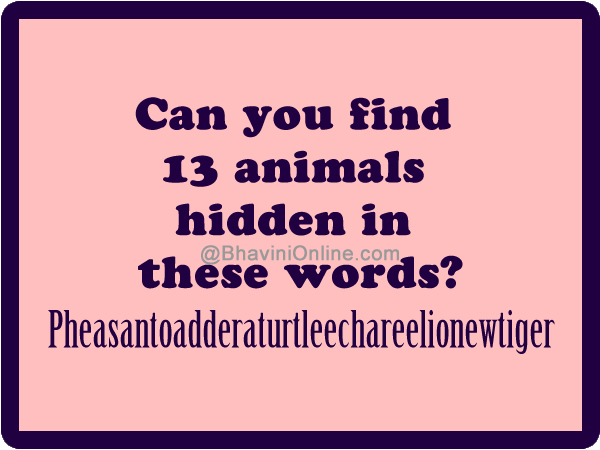 Can You Find 13 Animals