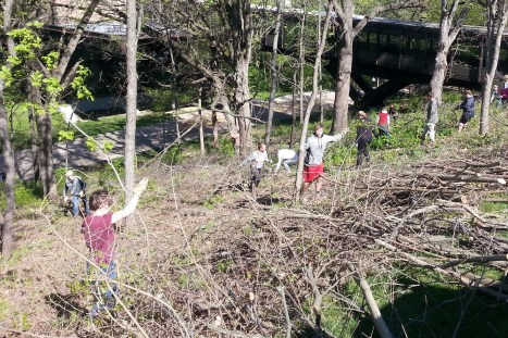 Invasive plants removal 5-5-16 (cropped)