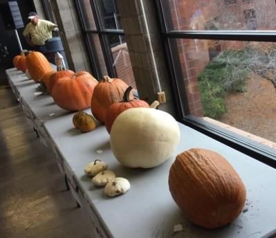 pumpkin-2016-1