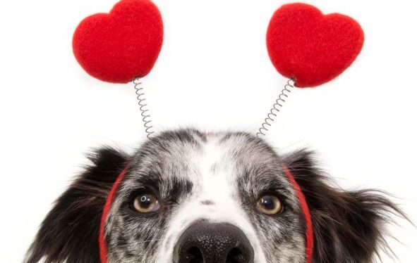 face of dog wearing headpiece with hearts