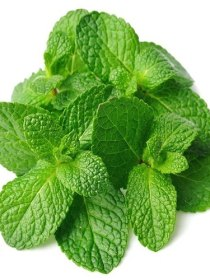 Apple Mint (100g)