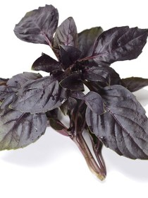 Purple basil (100g)