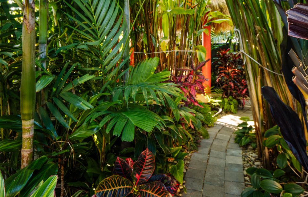 Create your own tropical backyard oasis | Better Homes and ... on Tropical Backyards  id=68550