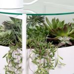 This Stylish Side Table Doubles As A Terrarium Better Homes And Gardens