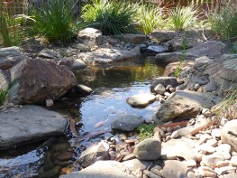 Natural looking native bush creek in Glen Waverley.