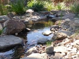 Natural looking native bush creek in Glen Waverley.