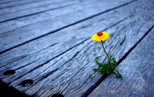 Image result for images of flowers sprouting