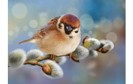 Birds Hd Wallpapers Free Wallpaper Downloads Birds Hd Desktop Wallpapers Page 1