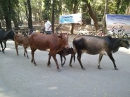 How can we complete the picture without Cows on road?