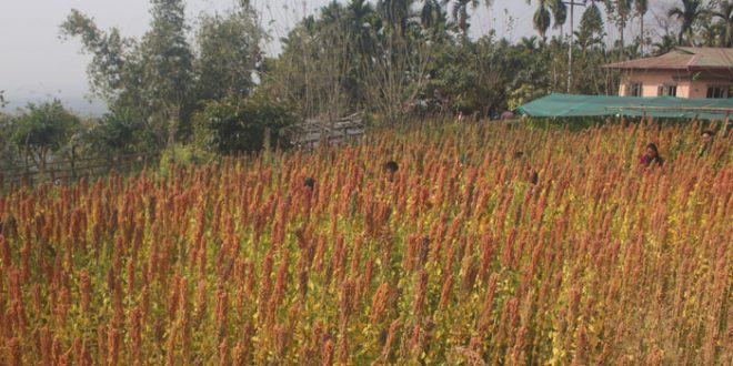 Bhutanese Farmers on Quinoa Farming are on the ride