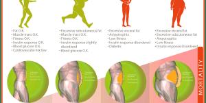 visceral fat risk types